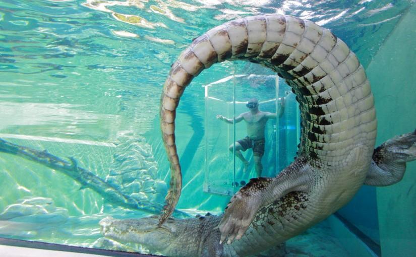 La atracción más impactante del Crocosaurus Cove, en Australia