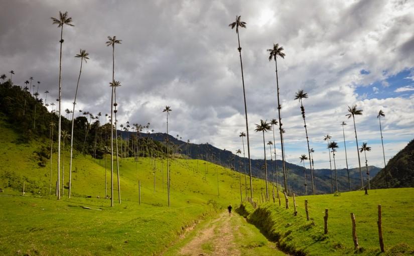 Las Palmeras más altas del mundo se encuentran en el Valle de Cocora